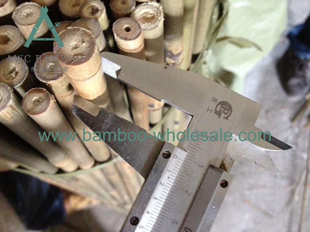 poli di bambù tonkin