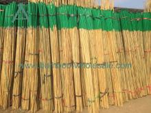 Poli di bambù plastichi